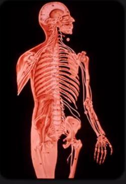 Anatomy 1 18