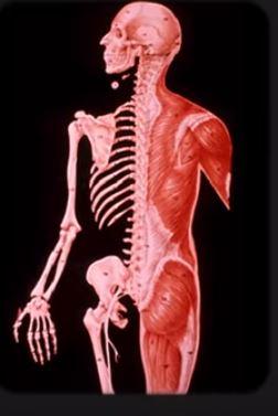 Anatomy 2 19