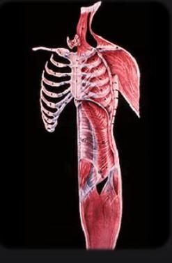 Anatomy 7 24