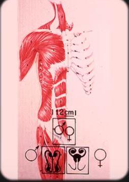 Anatomy 8 25