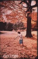 Autumn fallen leaves 48