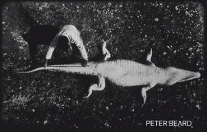 Crocodile 57