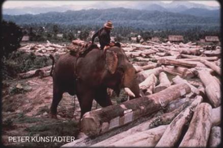 Domesticated elephant 67