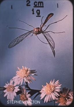 Flying insect with flowers 51