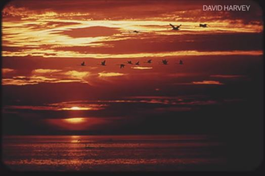 Sunset with birds 114